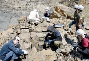 砕いた岩の表面に化石がないか調べる研究員ら=7月26日、福井県勝山市北谷町杉山