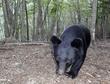 小学校近くでクマ3頭、児童が目撃