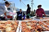 セイコガニ漁獲量25%落ち込む