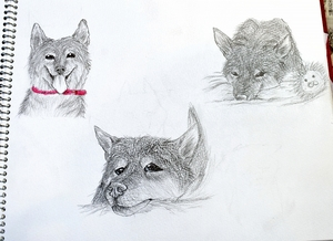 吉崎莉菜さんが制作している絵本の1ページ