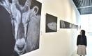 動物の感情絵画で表現 鯖江、吉崎さん個展
