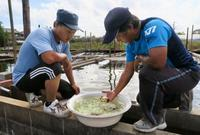 「ひと・まち・東海」伝統の金魚養殖守りたい