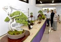盆栽の魅力存分に県内愛好家が披露 福井で3団体合同展