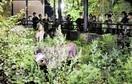 【街路樹】旭山動物園が夜も開放