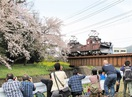 桜とラッセル車、夢のツーショット