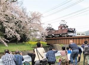 ラッセル車と桜の貴重なショットを狙う鉄道ファン=2016年4月、福井県永平寺町