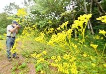 秋演出、かれんな黄色のオミナエシ
