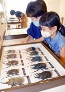 世界一のカブトムシとクワガタ展示