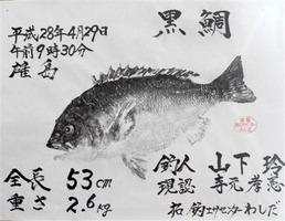 山下さんのチヌ魚拓