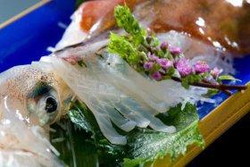 越前町での食事はとれとれイカ料理で決まり!