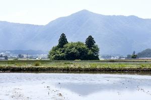 水田の中に浮かぶ猫の形をした林=福井県大野市蕨生