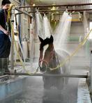 函館「馬温泉所」で競走馬が湯治