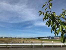 晴れ間が広がる9月7日の福井県福井市。最高気温34.9度を観測した