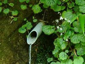 「ふくいのおいしい水」 林道沿いに湧出する水