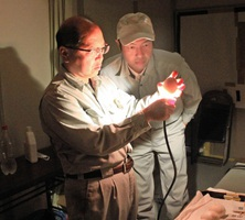 光を当てて、コウノトリの卵を調べる郷公園の船越主任飼育員(左)ら=8日、福井県越前市中野町(福井県提供)