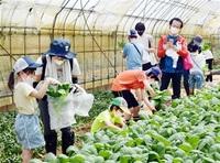 食品ロス 収穫で学ぶ 鯖江の親子13組が体験