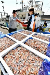 輝くホタルイカ、福井で漁ピーク