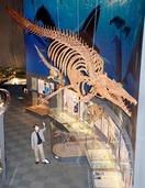 恐竜博物館に新展示、HPで紹介