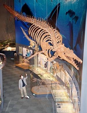 恐竜博物館、ネット予約で再開へ