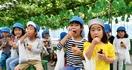 園児らブドウ収穫「超おいしい」