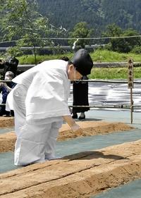 新嘗祭献納アワ、永平寺で種まき式