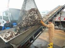 「スクランブル」衛星データで漁業効率化