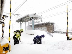 えちぜん鉄道三国芦原線の線路上に積もった約70センチの雪をかき分けるえち鉄社員=午前9時40分ごろ、福井市川合鷲塚町の鷲塚針原駅