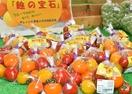 福井県産の新トマト「越の宝石」