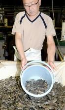 尾まで美しい 若狭ふぐ稚魚 小浜・県栽培漁業セン…