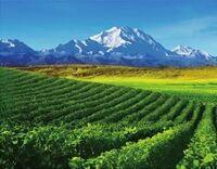 寧夏、世界のワインマップで人気が急上昇