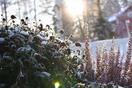 極寒の冬越す北欧人のステイホーム術