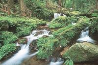 瓜割の滝(若狭町) 「水の森」荘厳な雰囲気 ふくい音風景(11)