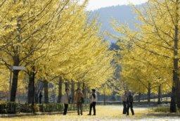 小春日和の福井市。世界各国でさまざまな 呼び方がある(写真は福井新聞紙面より)