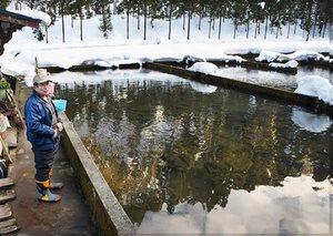 福井県内河川に放流される渓流魚の大部分を育ててきた養魚場=福井県池田町大本