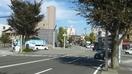イノシシが福井市中心部に現れる