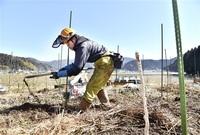 漆器産地活性化へ植栽 越前協組 ウルシの苗木800本 鯖江