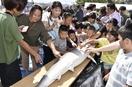 福井県立大「白樫祭」海や食企画