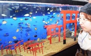 来年の干支にちなみスズメダイなど鳥の名前が付いた魚の展示=9日、福井県坂井市の越前松島水族館