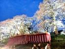 足羽川の桜並木を照らし続けたい
