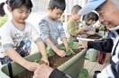 ブロッコリー 早く食べたい 鯖江の園児 苗植え…