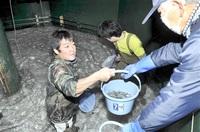 稚アユぴちぴち 初出荷 小浜・県栽培漁業センター 来月末まで 各漁協に170万匹 みんなで読もう
