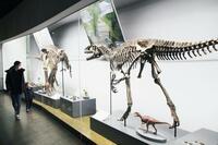 福井恐竜博物館、化石が500点