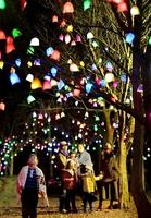 「ひかりの実」が幻想的に夜を彩るイルミネーション=26日夜、福井県あわら市の金津創作の森