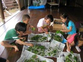 蚕の世話をする子どもたち