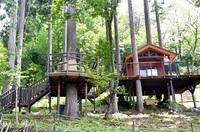 森の秘密基地で宿泊を 池田・体験施設 ツリーハウス開業 大自然一望、たき火場も