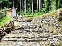 【写真特集】一乗谷、平泉寺が日本遺産に