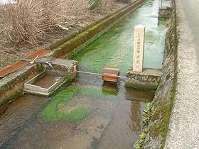 「ふくいのおいしい水」 バイカモが繁殖しトミヨが県内唯一棲息