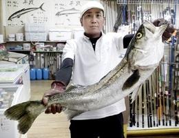 熊谷さんが九頭竜川で釣ったシーバス