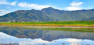 田植え前の水田にくっきりと映り込んだ荒島岳=5月8日正午ごろ、福井県大野市篠座