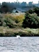 4人乗り小型機が九頭竜川に不時着